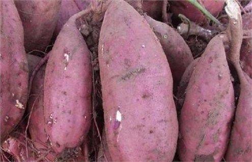 地瓜就是地瓜 红薯就是红薯 你别乱挂名字了