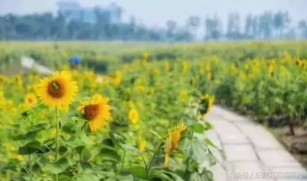 秦皇岛这条公路已美出天际!沿途风景颜值爆表!