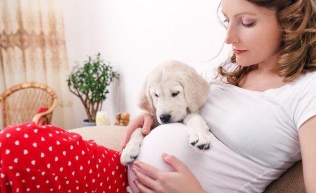 怀孕到底能不能养狗?从纯科学解答这个问题