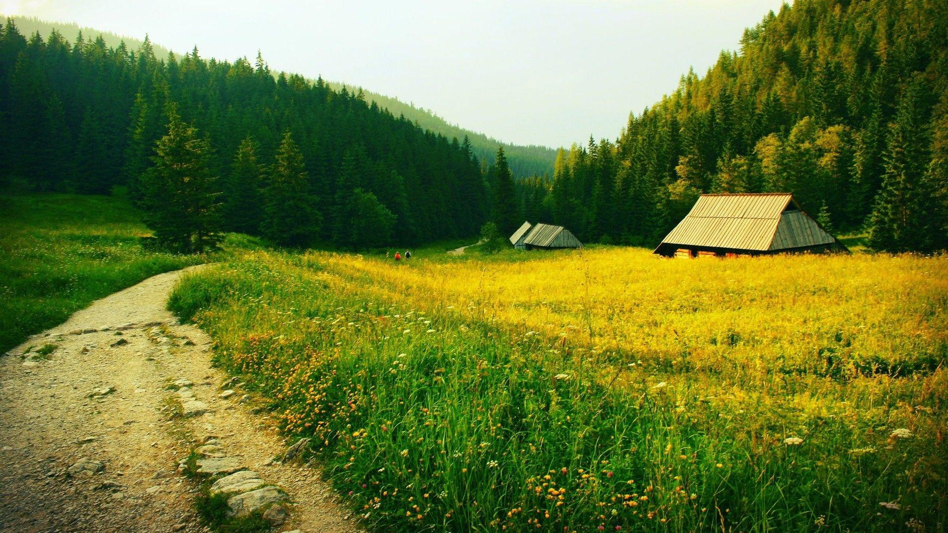 草原风景壁纸绿色