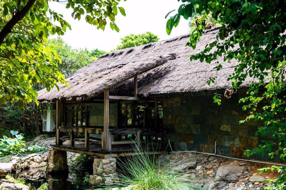 它是湛江湾中间的一座小岛,这是一座大隐于市的小岛,岛上植物种类丰富