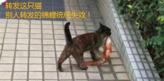 猫咪跑到水池叼走锦鲤,结果却成了表情包,在网上疯狂被转发