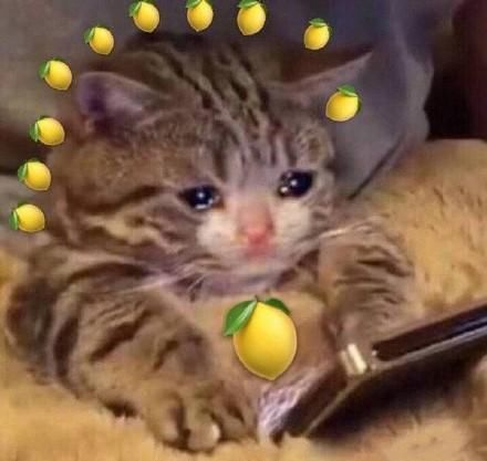 表情柠檬微信动态晚安表情:真酸图片