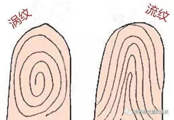 先天后天 左手代表先天(命),右手代表后天(运)。至于所谓男左女右的原则,可能是基于传统文化中男人先天地位高女人一筹的原因。此外,也有35岁以前看左手,35岁以后看右手的说法。 先天三大纹:天纹、人纹、地纹。基本上所有人一出生就有这三纹,只有少数人天纹和人纹合二为一,形成断掌纹。(据说:左断掌官运佳、右断掌克六亲,左断把握兵符、右断掌财库。怎奈何笔者只是克六亲,升官发财无望?) 后天三大纹:玉柱纹、六秀纹、考证纹。这是后天长出来的,有些人有,有些人没有。  三才 三才指天