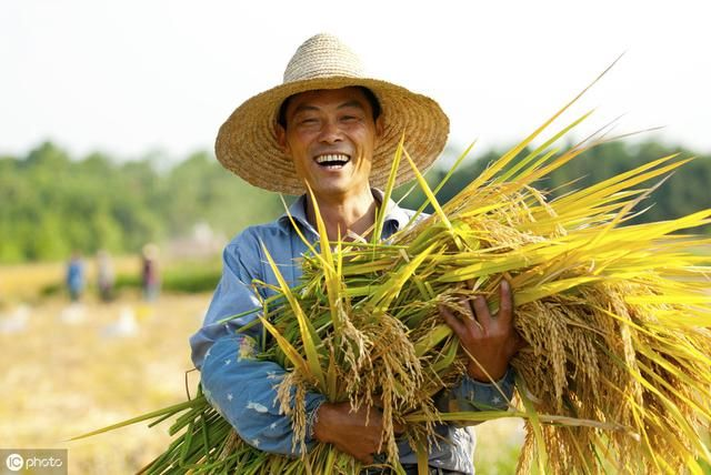 水稻什么时候喷施磷酸二氢钾最合适?农民把握两个时期很关键