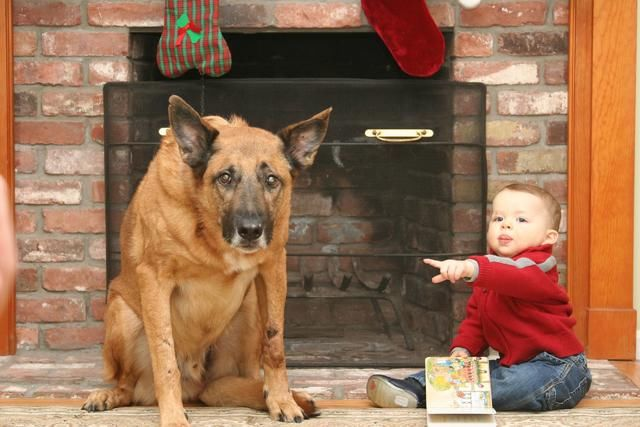 狗狗胃胀气,臭屁放不停,教你四招缓解狗狗肠胃胀气