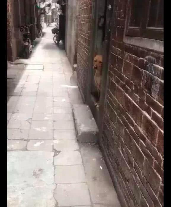 网友把狗送到朋友家寄养,它就坐在门口望:主人是不是不要我了?