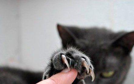 笑到睡不着的动物搞笑图片