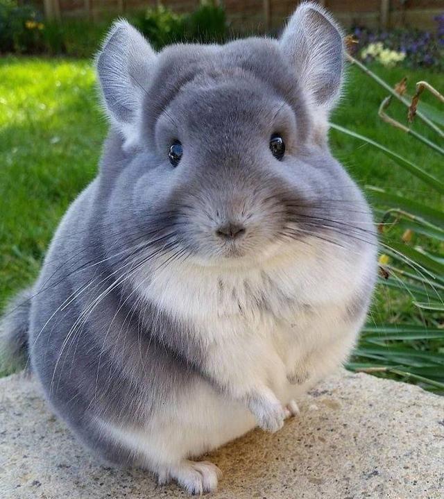 世界上最可爱的动物没有之一,长得不好看,但网友们都想要!