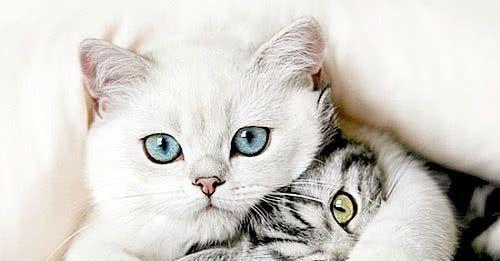 猫咪不喜欢主人的三大表现,铲屎官需注意,它随时有可能离家出走