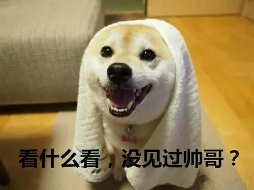 超萌宠物图片:本就是大全傲娇,皮到你表白人的猫表情大人包表情的怀疑图片