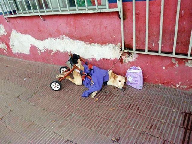 <b>残疾狗狗被扔路边,主人留下一袋尿布和一张纸:它不是我的狗</b>