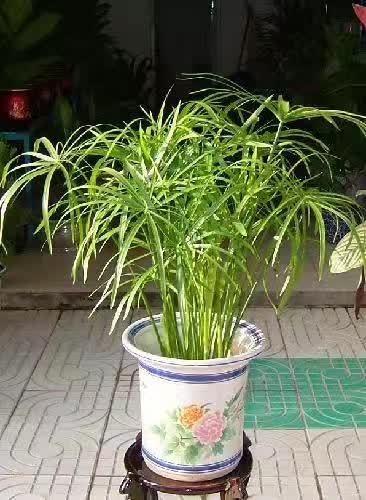50种植物养护秘诀,以后养花不怕再养死了! -   夫~君 - 亢龙有悔