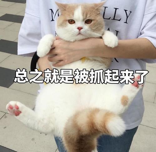 傲娇不好表情:生气了,哄表情的那种起床打lol了搞笑猫咪包图片图片