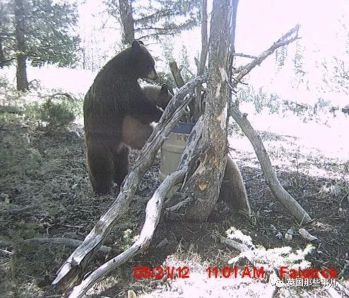 到达野生动物园我国还有哪些受到保护的珍稀野生动物金丝猴,扬子鳄