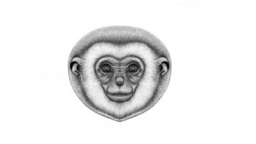 狗狗头像(铅笔画素描)猴子头像(铅笔画素描)野猪头像(铅笔画素描)狮子