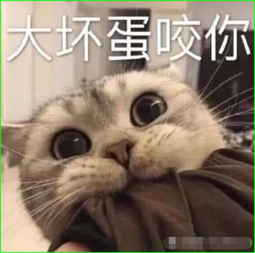 超萌的表情生气猫咪,你若安好,那还表情!跑不了动态包得了图片