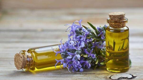 迷迭香精油的功效与作用 迷迭县精油的使用方法