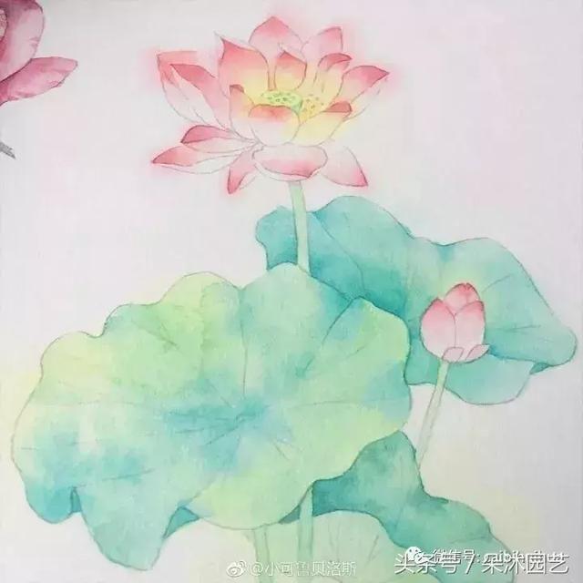 教你画自带仙气的漂亮荷花 || 水彩画教程!