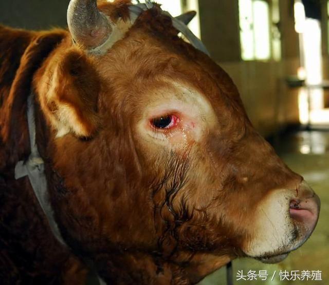 动物资源面临严重威胁