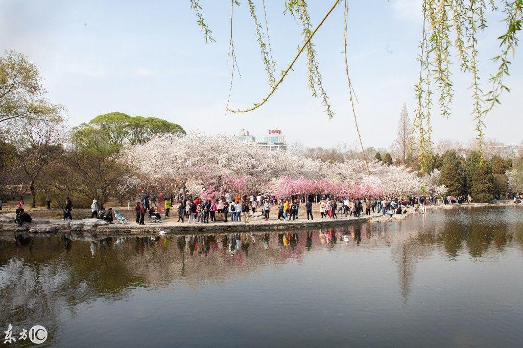 春天里的北京玉元坛公园格外热闹