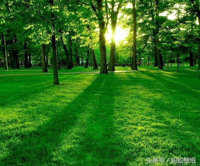 壁纸护眼,养眼,绿色风景图片!手机壁纸!《免费送啦》