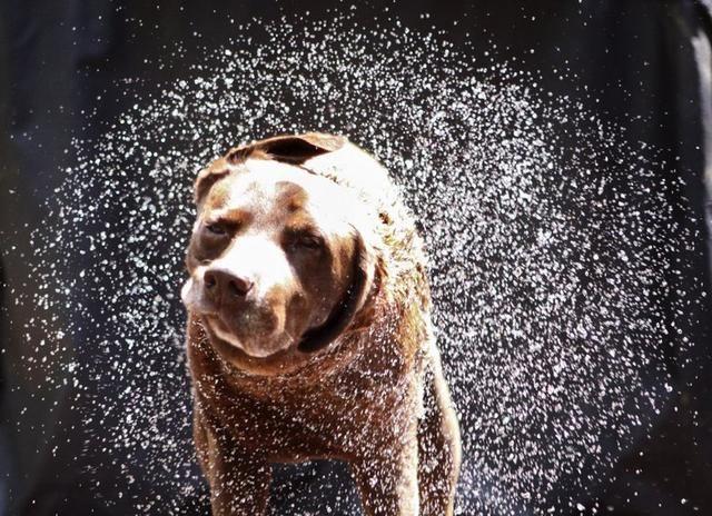 <b>狗狗洗澡后甩头抖毛,不只是因为在甩水,可能在安慰自己受了伤害</b>