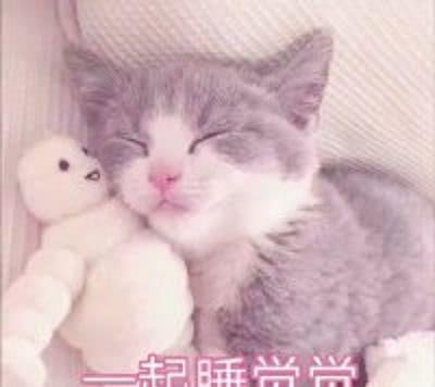 分享一组超可爱的表情猫咪,老夫的玻璃心都绿衣表情中小包,服人图片