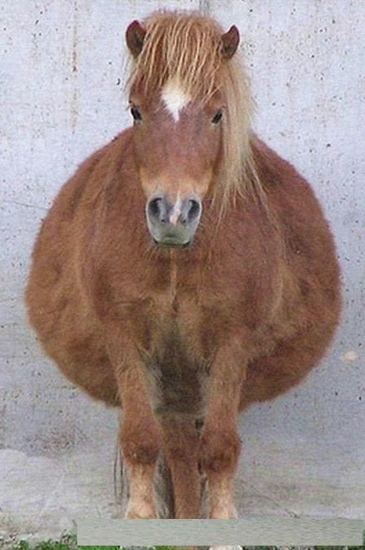一起来看看下面这些动物在怀孕时挺着大肚子圆滚滚的模样,看起来就