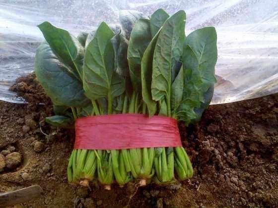 《泰安镇游记初中饼》良庄高新区状元词安卓版人教菠菜美食图片