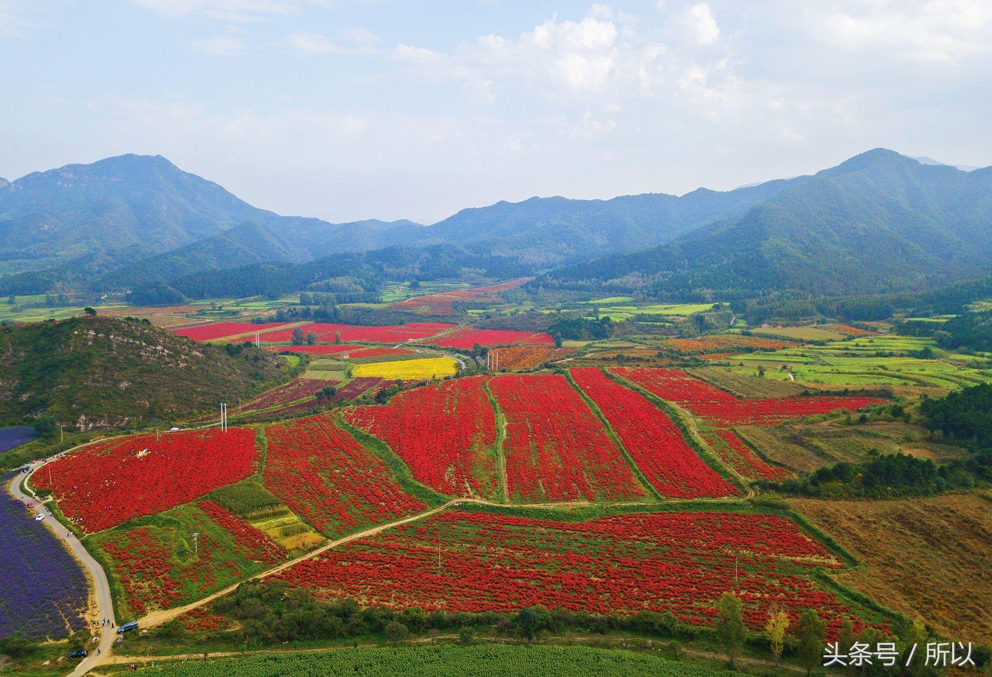 航拍北京延庆四季花海:山间铺花毯 田园调色板