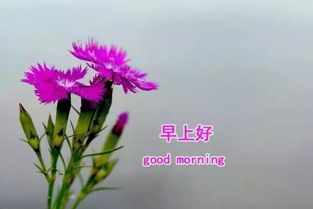 早上好图片带字和鲜花 新的一周发朋友圈早安心情说说