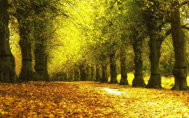 壁纸 风景 森林 桌面 1440_900