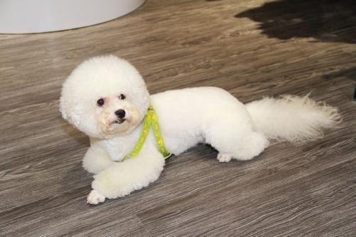 他们可能是世界上最小的狗狗,不但可爱,还超级会卖萌!