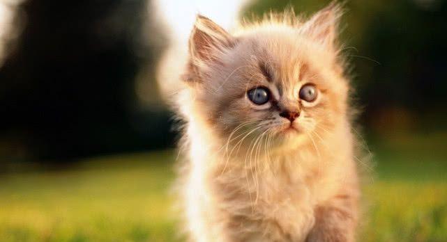 猫喜欢不喜欢被主人拥抱,跟这5个原因有关,快来科普一下!