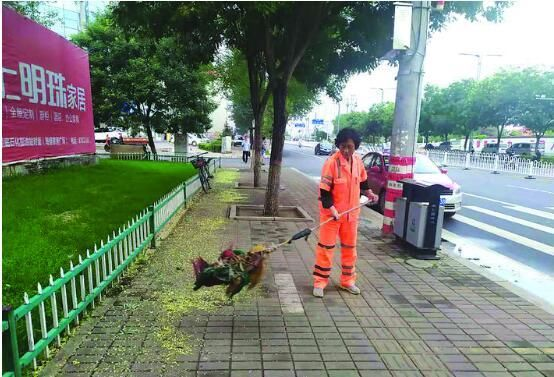 槐花朵朵满地落 环卫工人清理忙