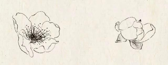 步骤图勾线【零基础学画|工笔杏花正见盛时犹怅望 岂