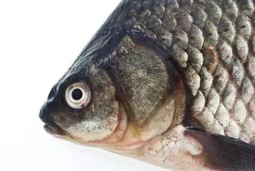 【食安科普知识】关于鱼的!