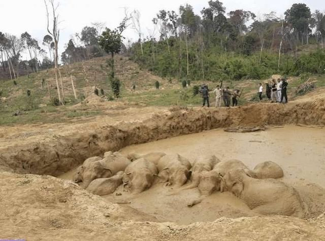 云南村民在泥潭中发现超级怪物,结果吓一大跳