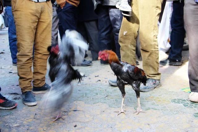见证大班文化:亲历喀什热闹奇特的斗鸡的巴扎幼儿园足球巴扎保龄球方案图片