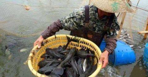 <b>中国吃货拿它毫无办法,越南老哥却成为克星,将其吃到灭族</b>