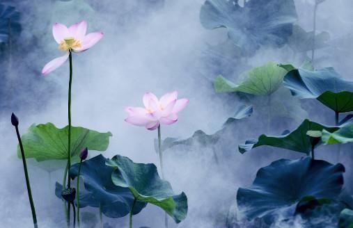 中国4大名花,图1出淤泥而不染,图3独天下而