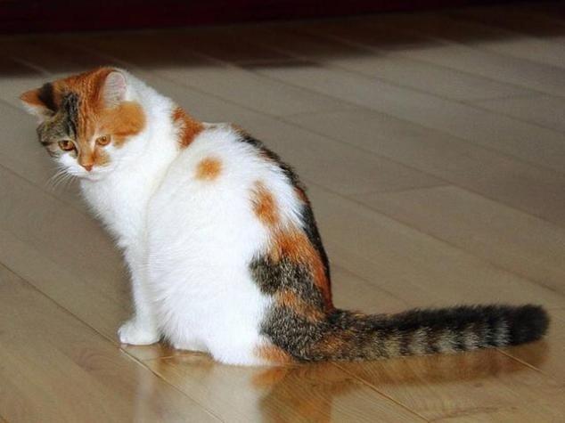 家里养猫味道很大,猫的错?主人的错?与其互相甩锅不如解决问题