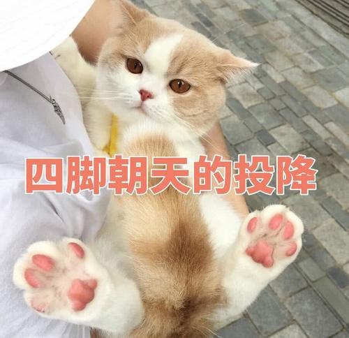 傲娇不好猫咪:生气了,哄表情的那种超时空图表情包我带图片