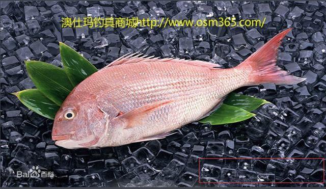 [热文]舟山渔场的钓鱼鱼种与季节钓法