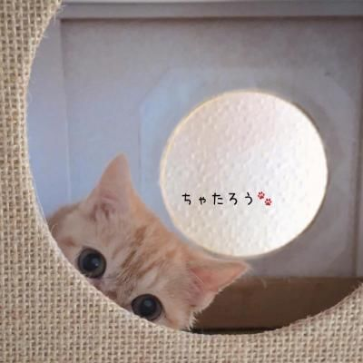 微信萌宠可爱小猫咪头像2018精选