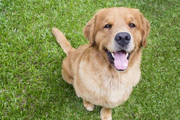 <b>别自以为是了,狗狗对你微笑不一定是喜欢你,可能是想要攻击你</b>