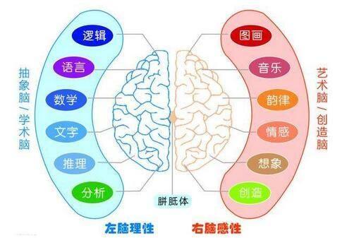 左脑��!$_左右脑年龄测试风靡朋友圈,左脑负责语言右脑负责图像?