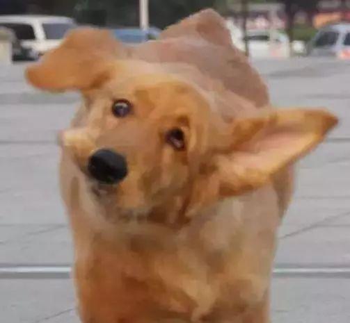 有个不会拍照的铲屎官有多可怕?狗子:丑到惨绝人寰!