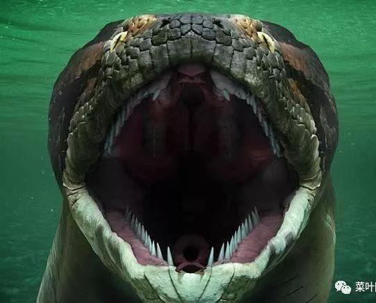 如果被这样的巨大蟒蛇缠住,即使巨大的乌龟也会粉身碎骨,背上的硬壳